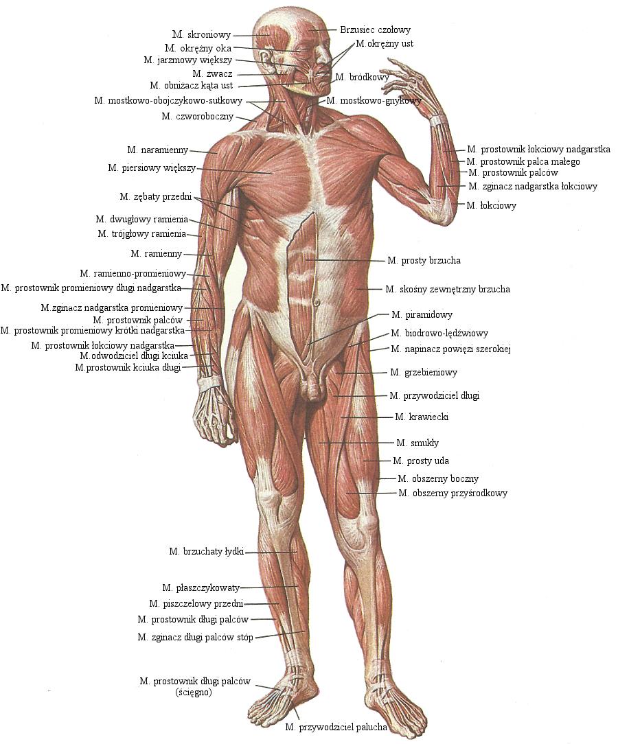 Строение глаза человека: анатомия 95